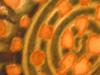 02-23-04_image-2_thumb.jpg
