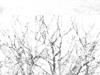 03-17-04_image-3_thumbb.jpg