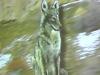 05-21-04_image-2_thumb.jpg