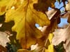 10-22-04_image-3_thumb.jpg
