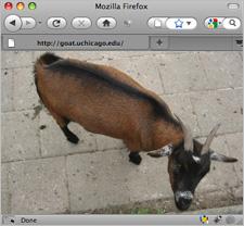 goat-browser2.jpg