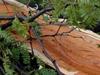 trees1_thumb.jpg